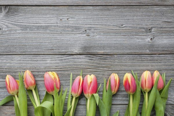 fresh tulips arranged on old wooden background with copy space for your message